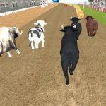 Sint Bull Racing